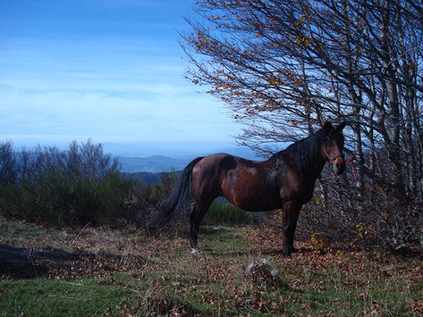 passeggiata guidata cavallo con pic nic reggello vicino firenze